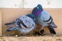 Las palomas en la ciudad