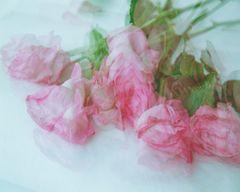 Las rosas olvidadas , Die vergessene Rosen