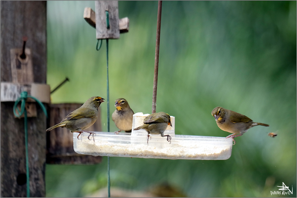 Las Terrazas - Oiseaux