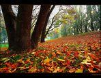 Lascio le foglie al vento