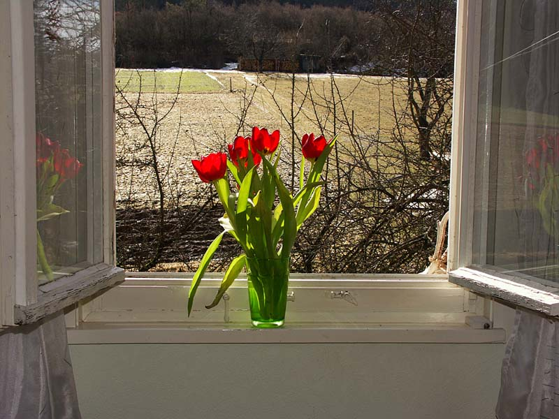 lass den Frühling rein