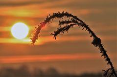 Laß die Morgensonne ...