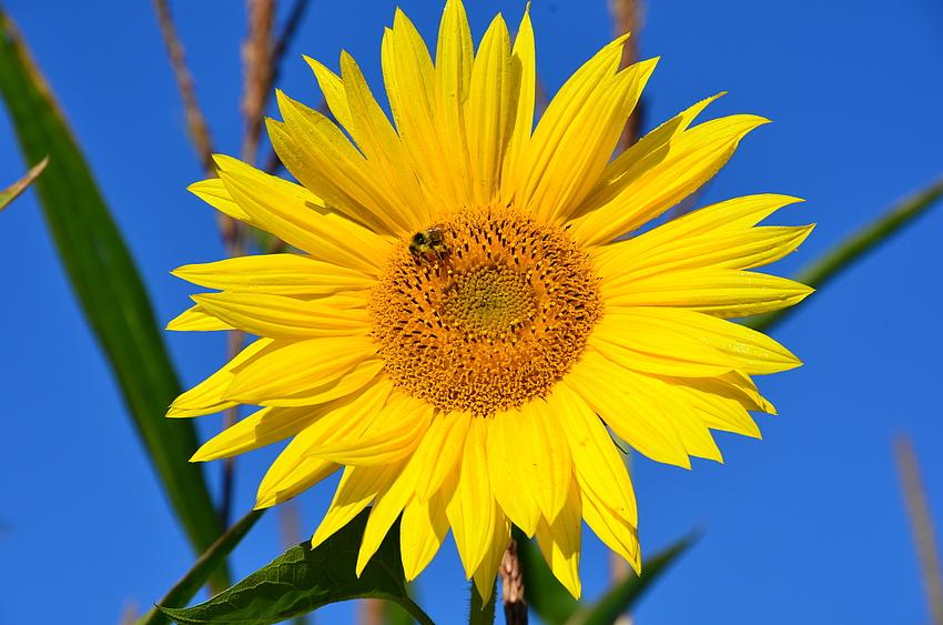 Lass die Sonne in dein Herz....