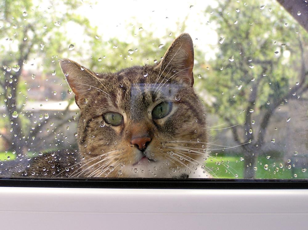 Laß mich doch herein
