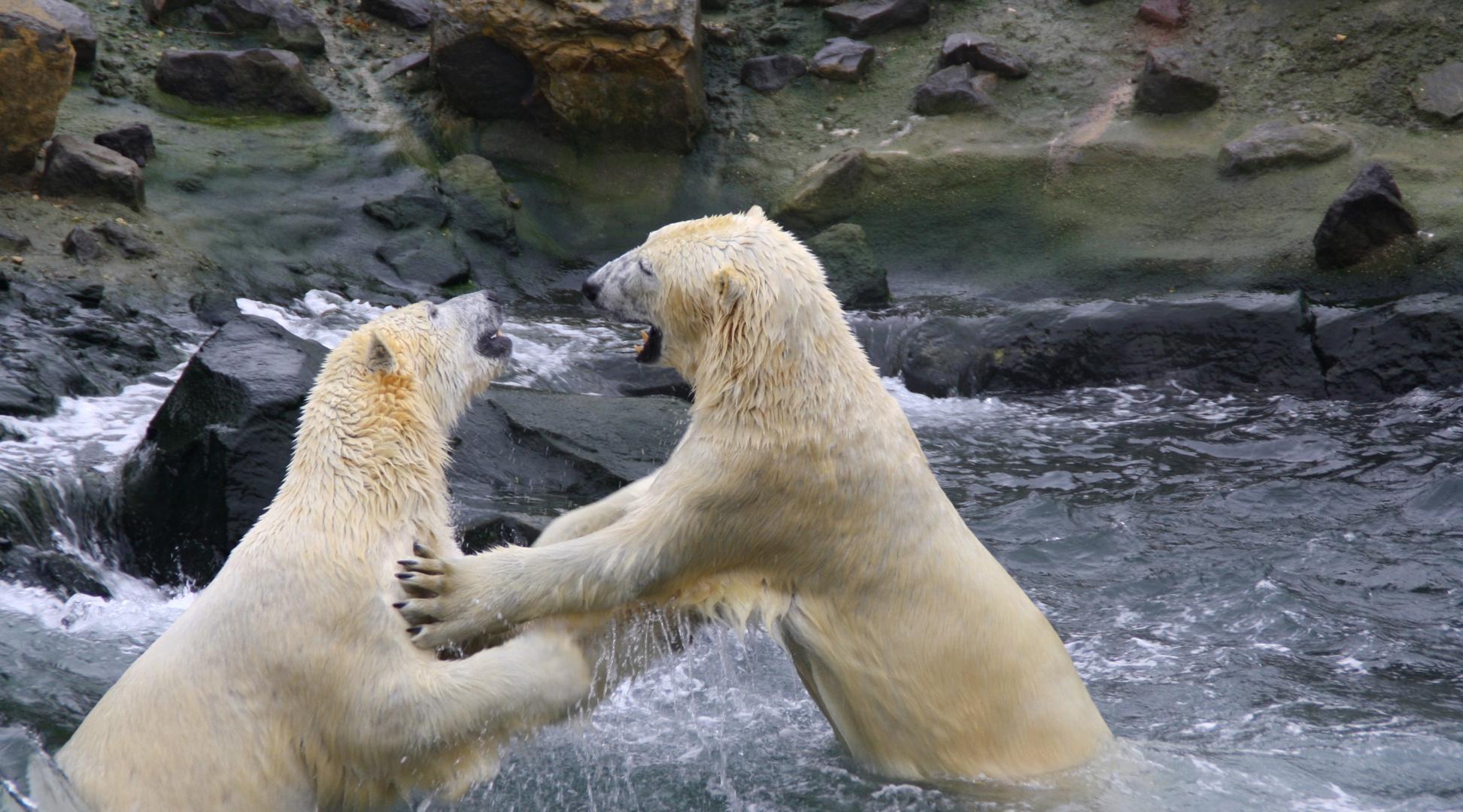 Lass uns tanzen.....