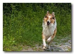 Lassie is come back... :-)
