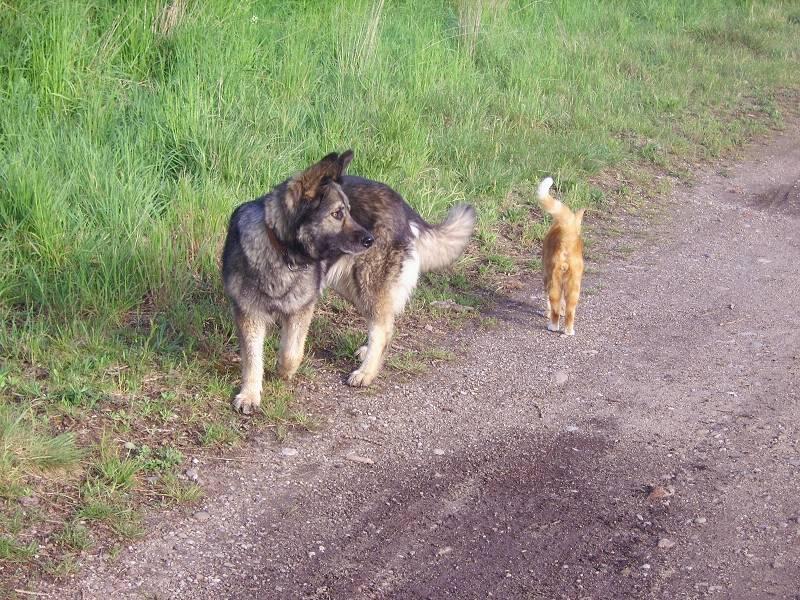 Lassie & Muly 0002