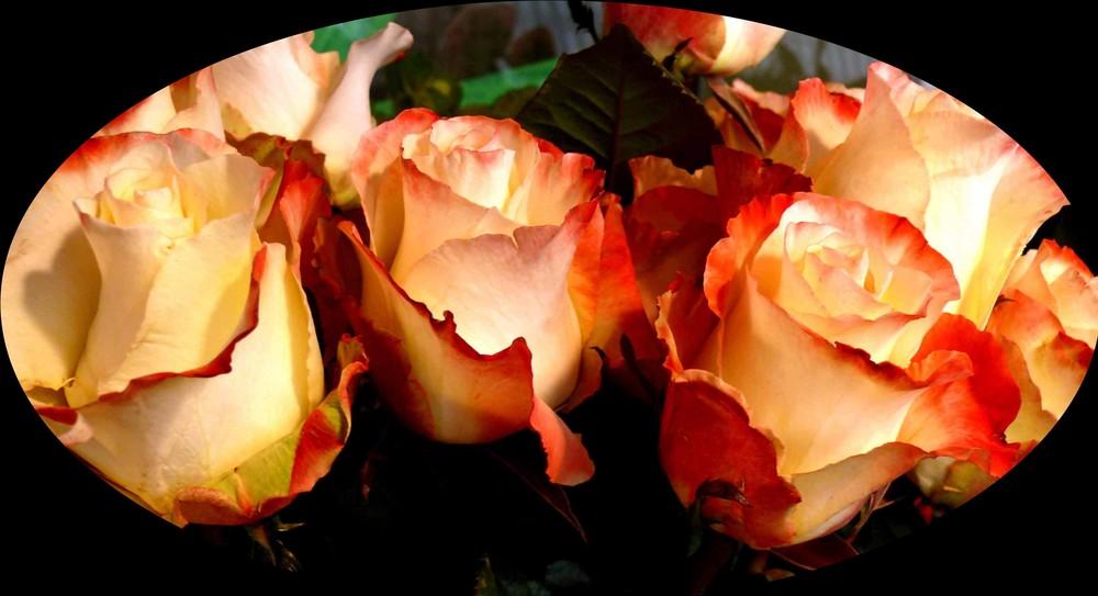Lasst Rosen sprechen