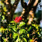 Last Crepe Myrtle Blossom of Summer
