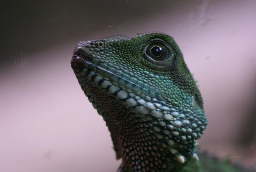 last dragon (color)