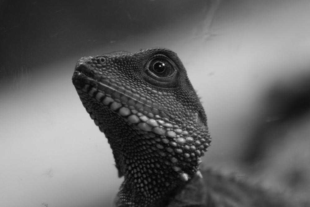 last dragon (S/W)