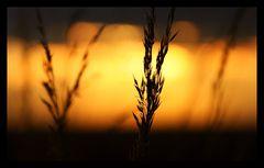 -- Last Light [2] --