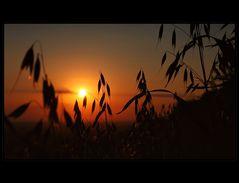 -- Last Light [4] --