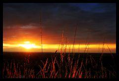 -- Last Light --