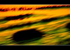 Last Seasons/ Emotion als Spiegel des Denkens nur was ist im Totenwinkel???