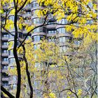 Late Autumn - A Murray Hill Impression