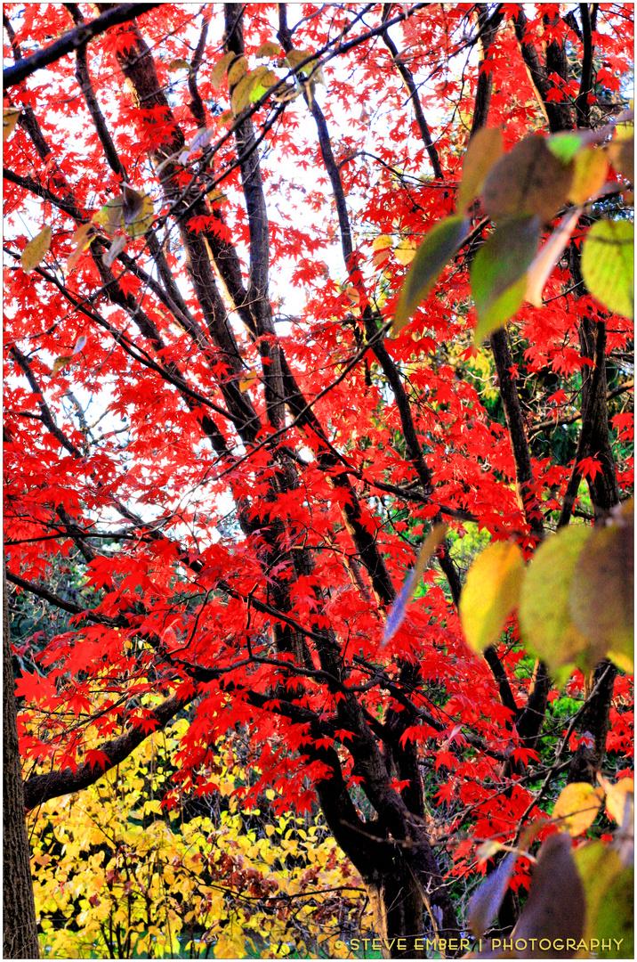 Late Autumn at Meadowlark