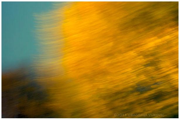 Late Autumn One 2