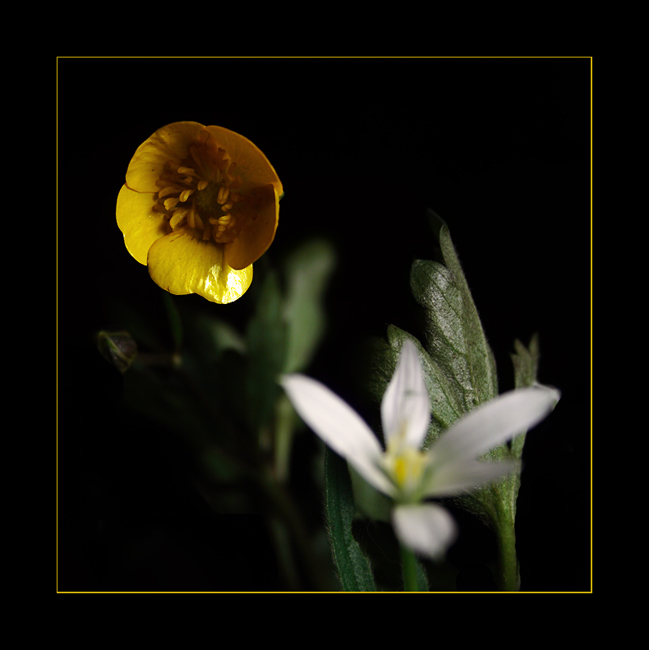 late flowers 02
