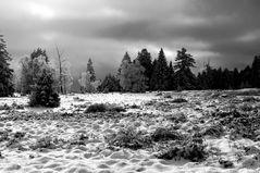 late winter light 2202