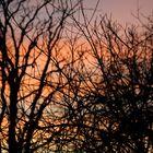 (late) Winter's Sunset
