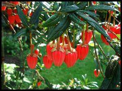 Laternenbaum