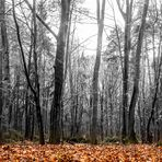 Laub im Wald