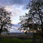 Laubbäume im Abendlicht (I)