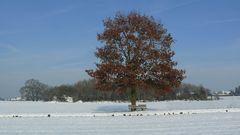 Laubbaum im Winter