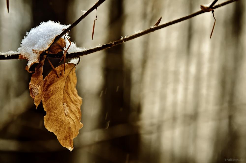 Laubblätter im Winter