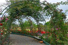 Laubengang im Roseiral