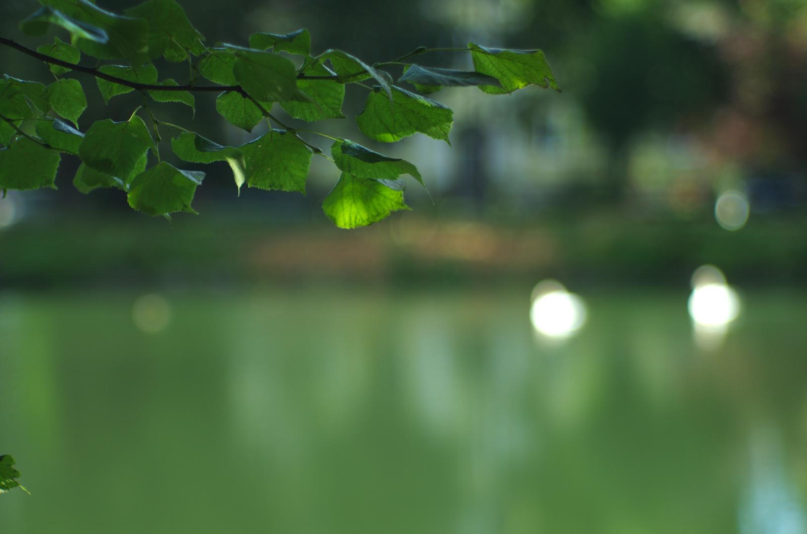 Laubgrün vs. Wassergrün