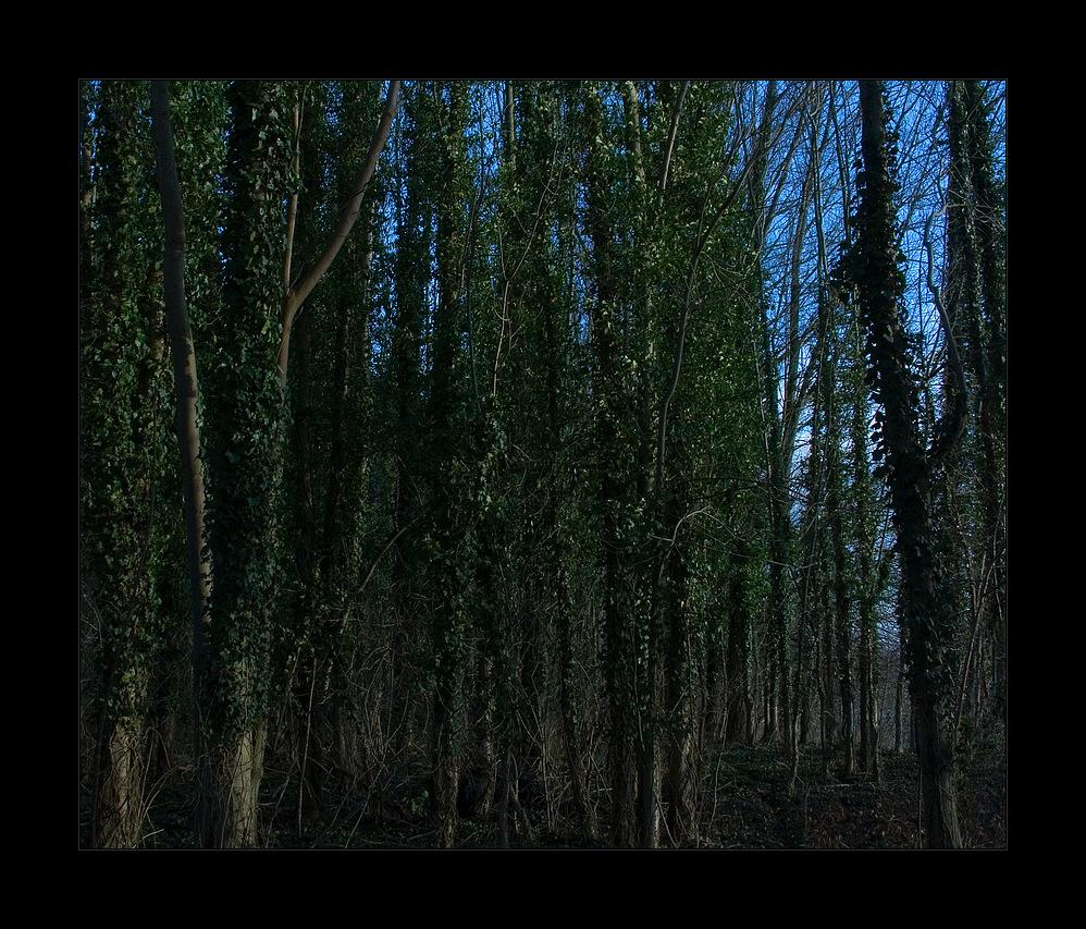 LAUBLOSE ZEIT: ...im Wald des Druiden...