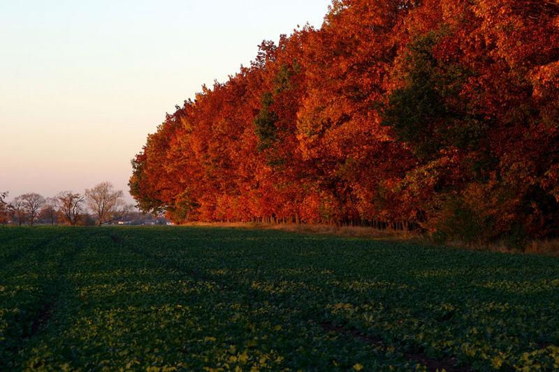 Laubwald am Feld