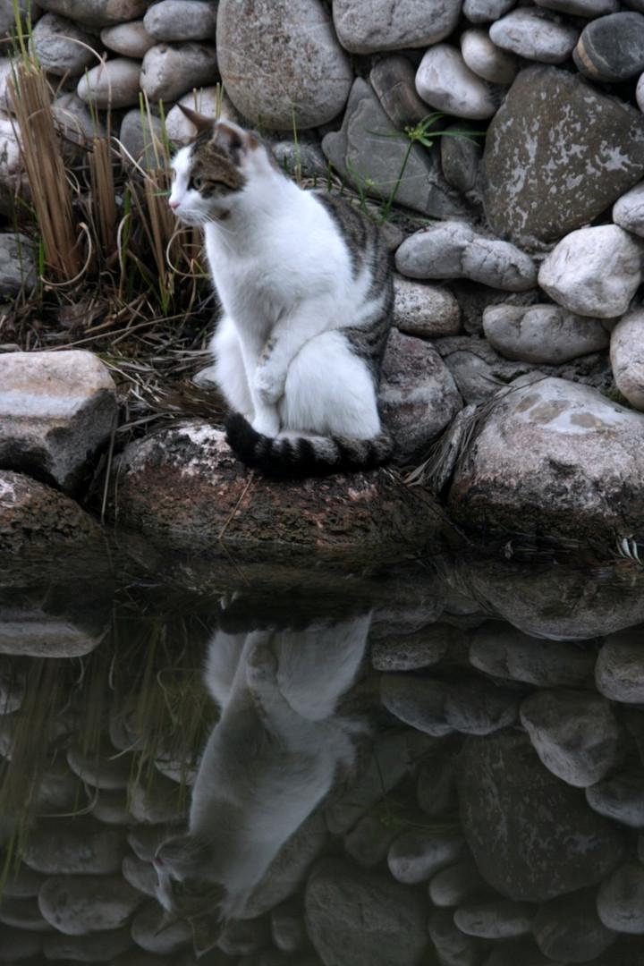 lauern auf den Fisch