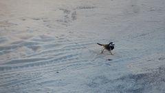 Lauf, kleiner Vogel! Lauf!
