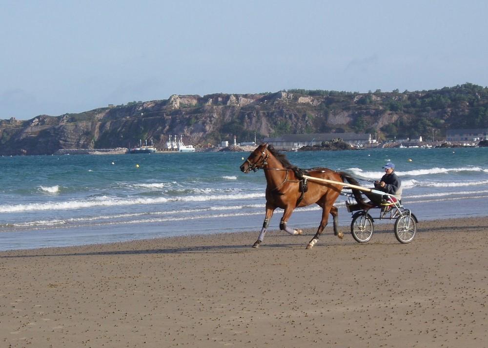 Lauf, mein Pferdchen !!!