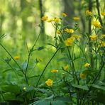 laufen durch den Frühlingswald..