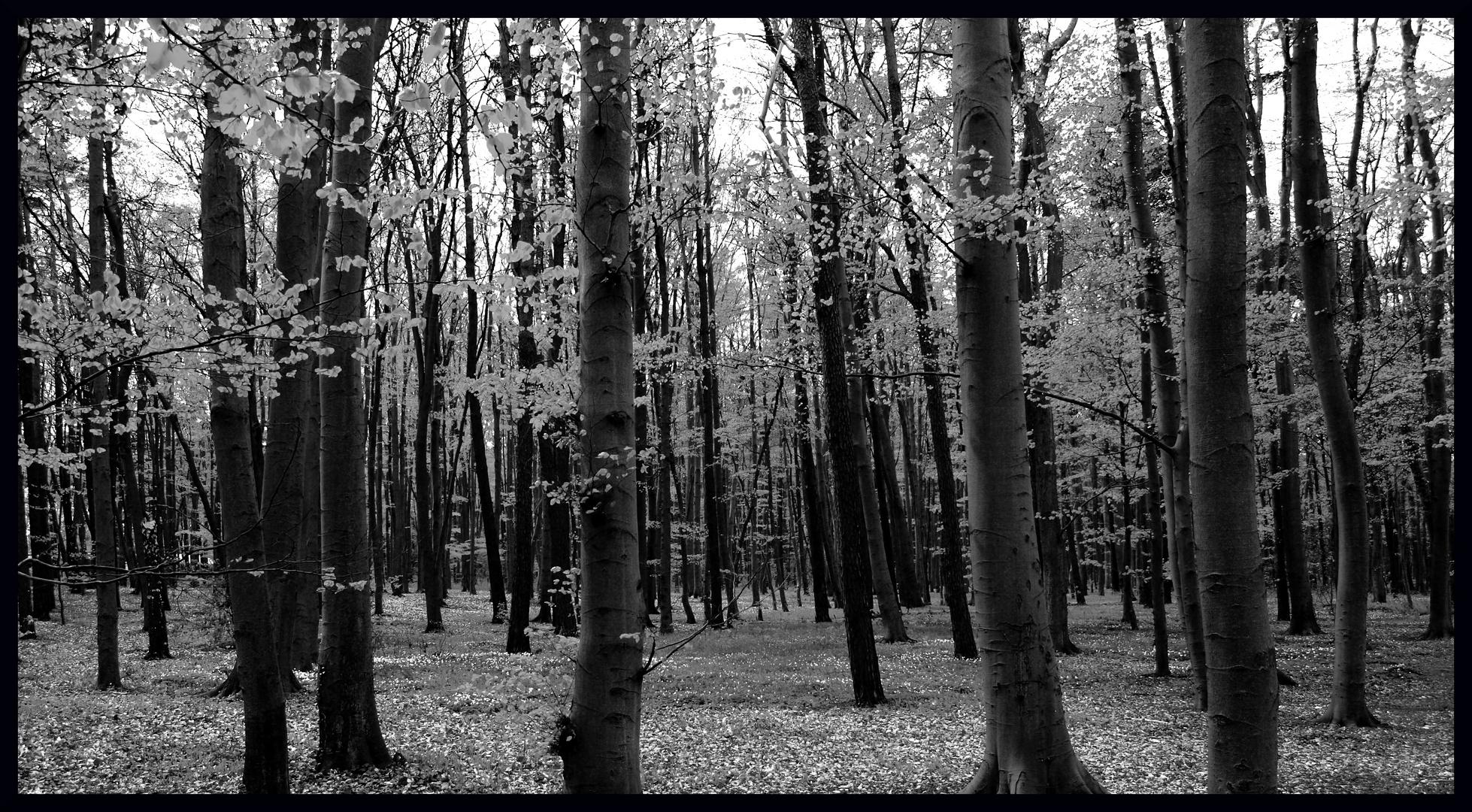 lauter Bäume