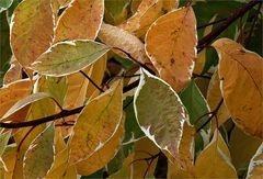 Lautlos schleicht der Herbst heran