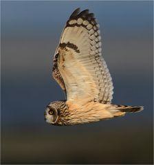 Lautloser Flug