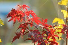 L'automne 2