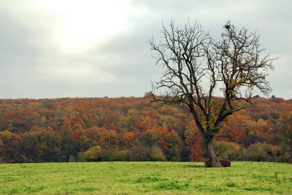 L'automne à Marcinelle