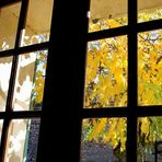 L'automne aux carreaux