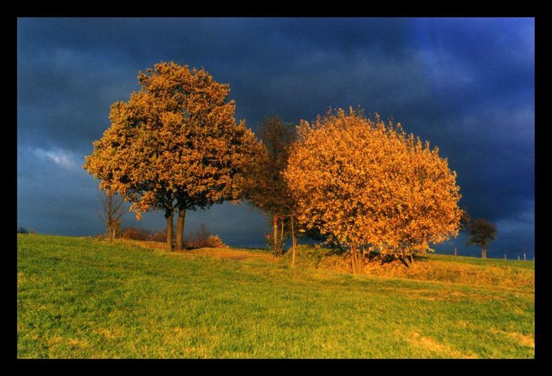 l'automne doré
