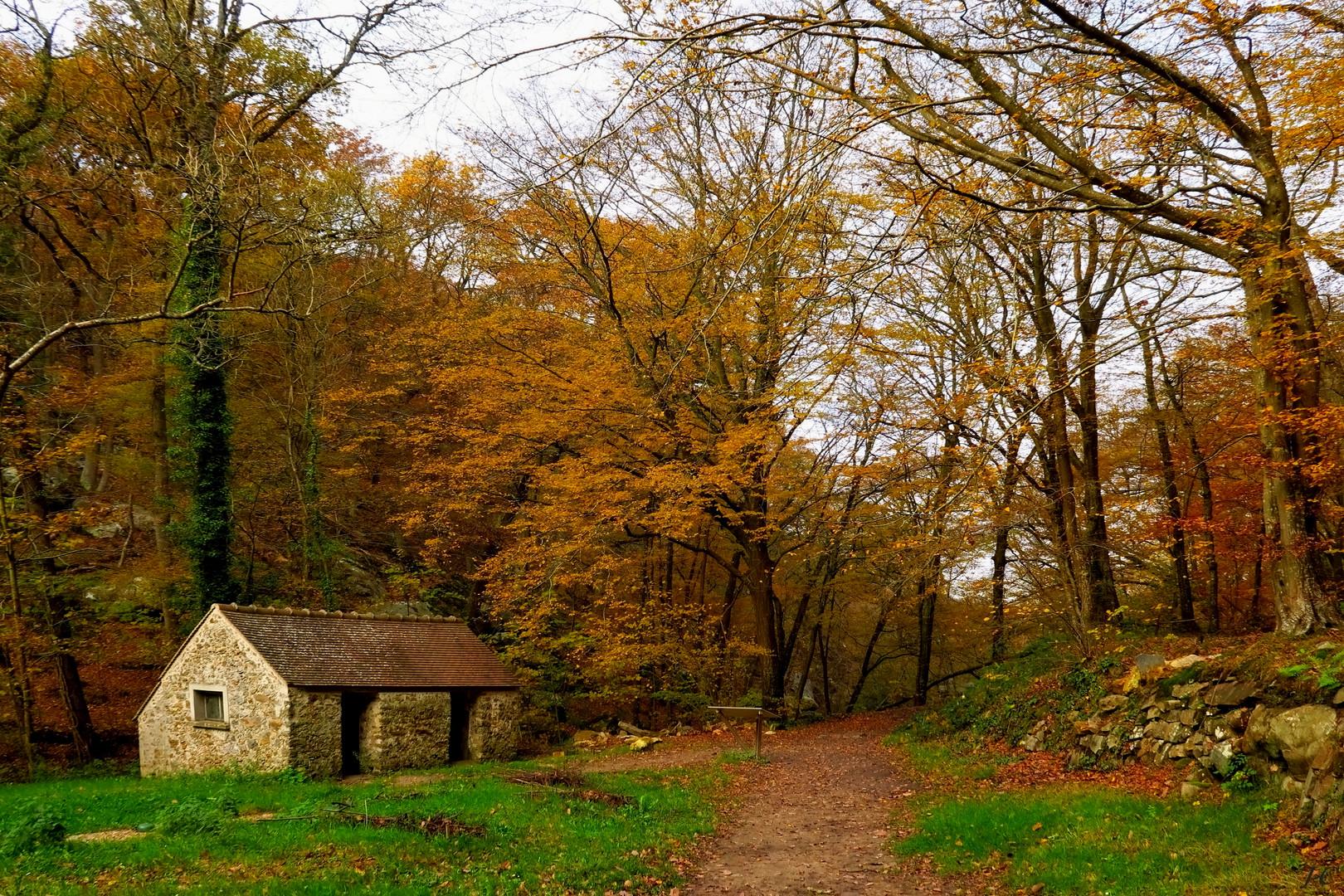""""""" L'automne en forêt ."""""""