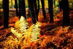 L'automne en forêt
