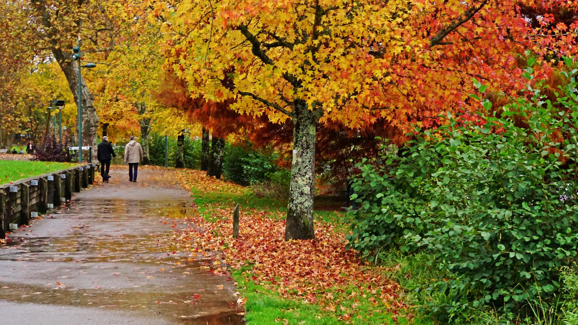 L'automne sous la pluie......