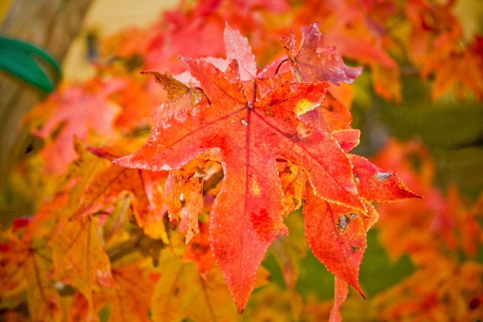 L'Autunno con le sue foglie