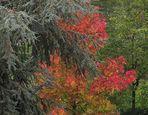 L'autunno dietro casa